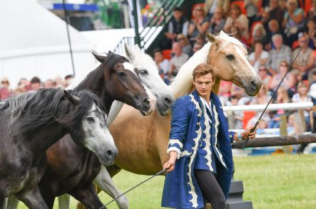 Television equine stars to perform at 2018 New Forest and Hampshire County Show