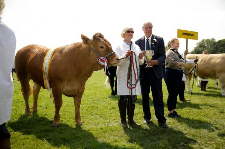 New livestock showing opportunities at 2019 Kent County Show