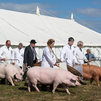 Dorset County Show pic 8