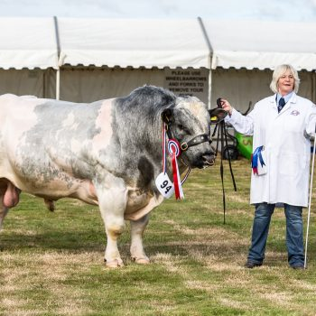 Dorset County Show pic 5