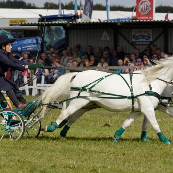 Dorset County Show pic 2