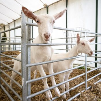 Dorset County Show pic 4